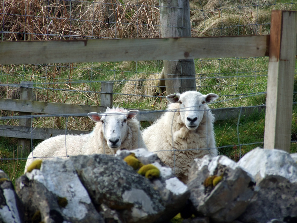 Neighbours at Air an Oir Ardnamurchan Scotland